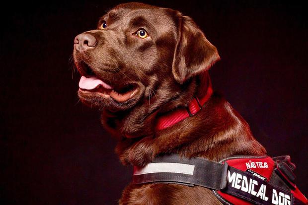Cão de Alerta Médico