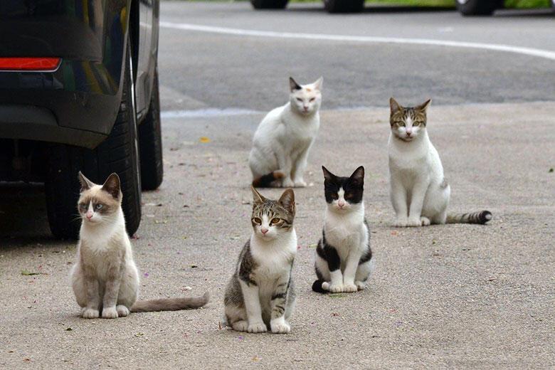 Gatos rua